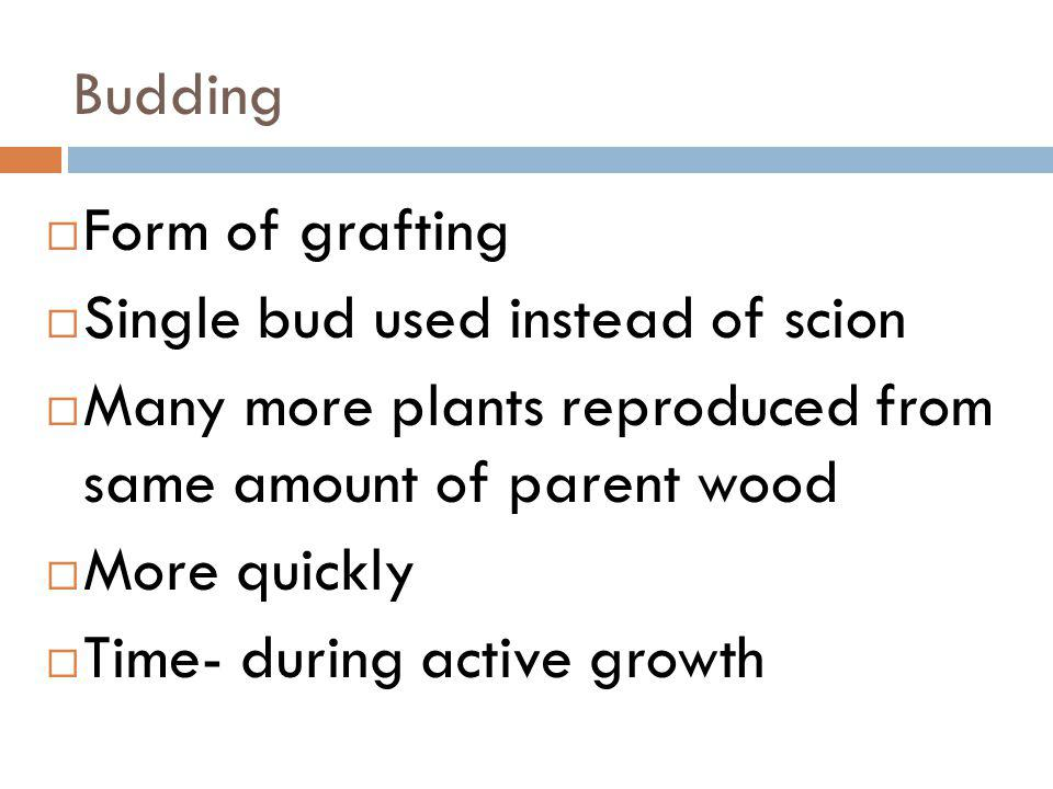 Budding Form of grafting. Single bud used instead of scion. Many more plants reproduced from same amount of parent wood.