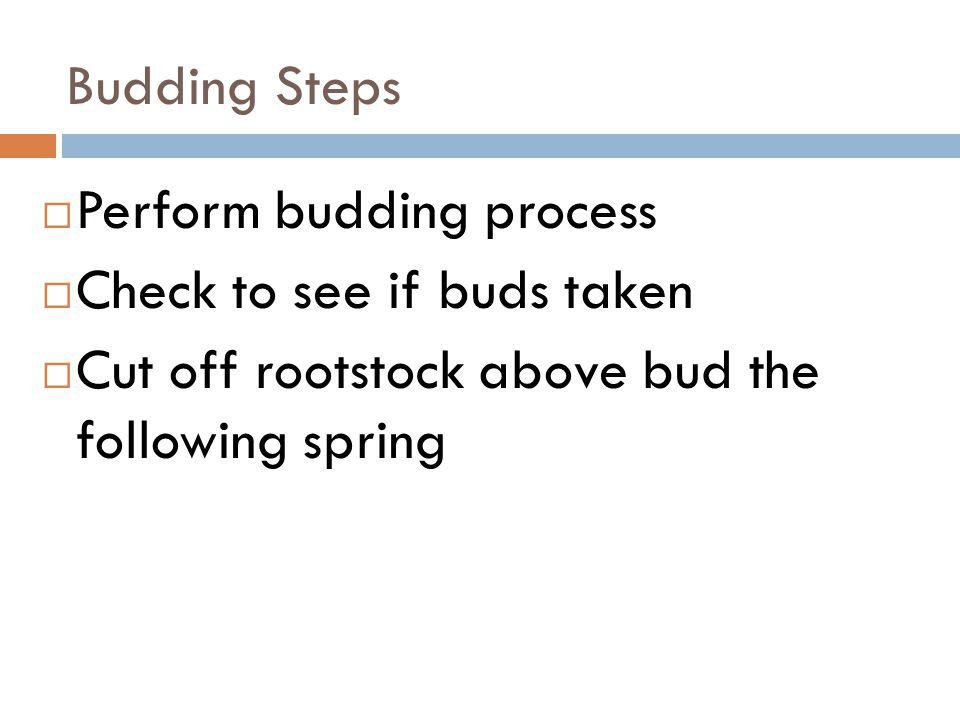 Budding Steps Perform budding process. Check to see if buds taken.