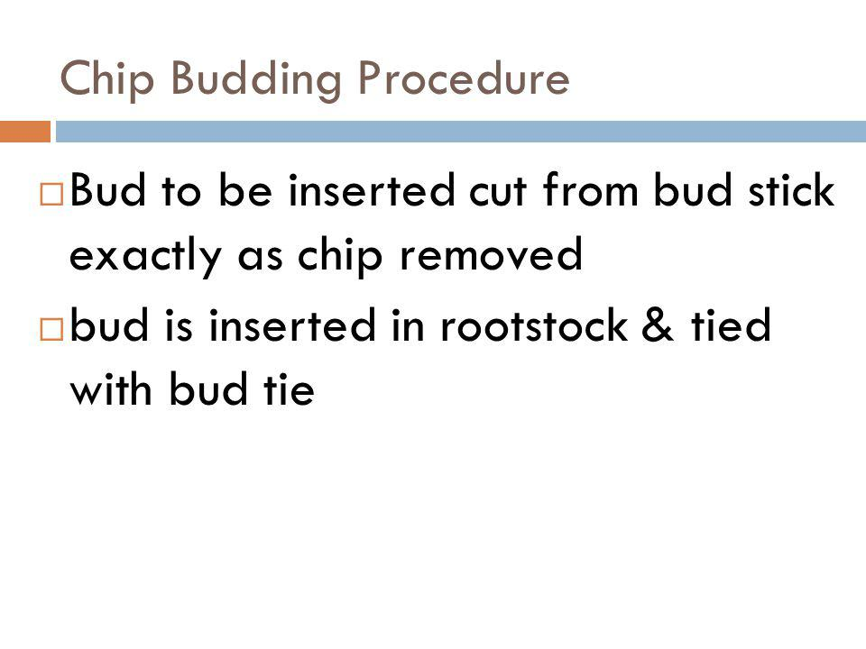 Chip Budding Procedure