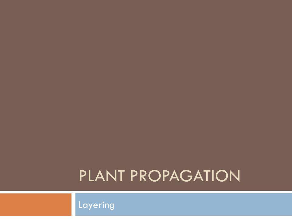 Plant Propagation Layering