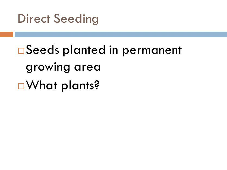 Direct Seeding Seeds planted in permanent growing area What plants