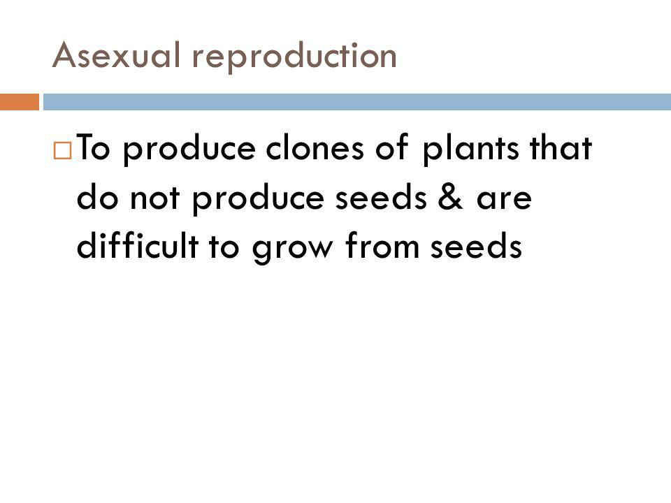 Asexual reproduction To produce clones of plants that do not produce seeds & are difficult to grow from seeds.