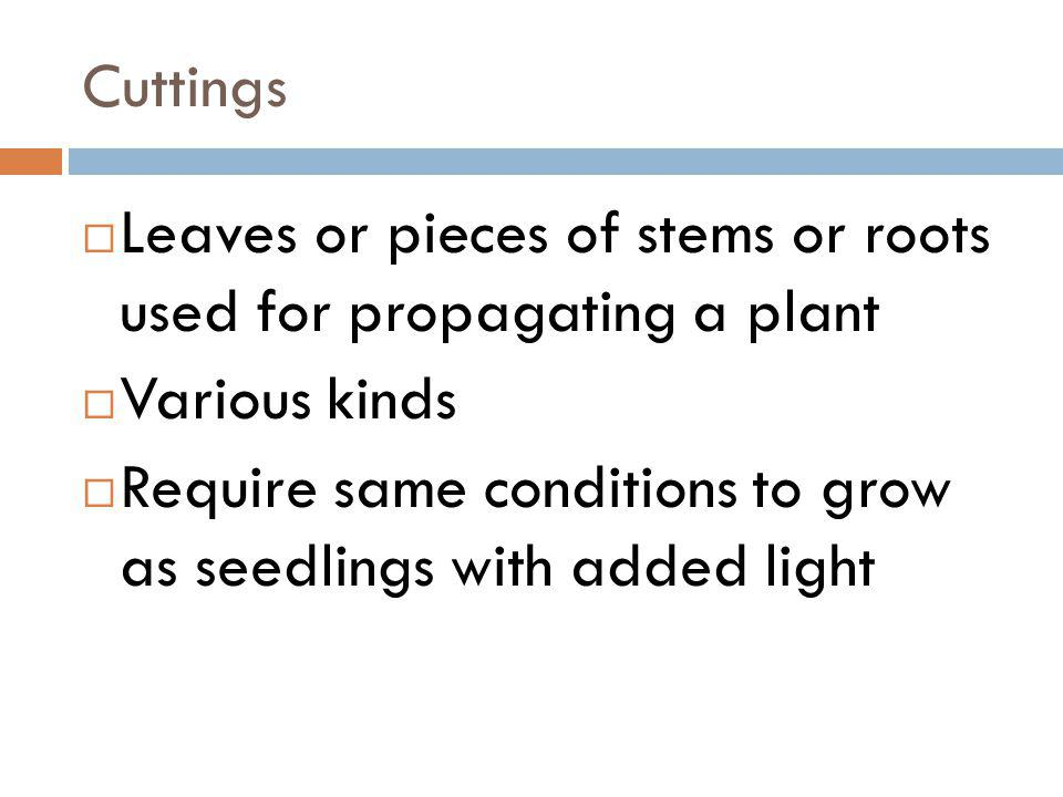 Cuttings Leaves or pieces of stems or roots used for propagating a plant. Various kinds.