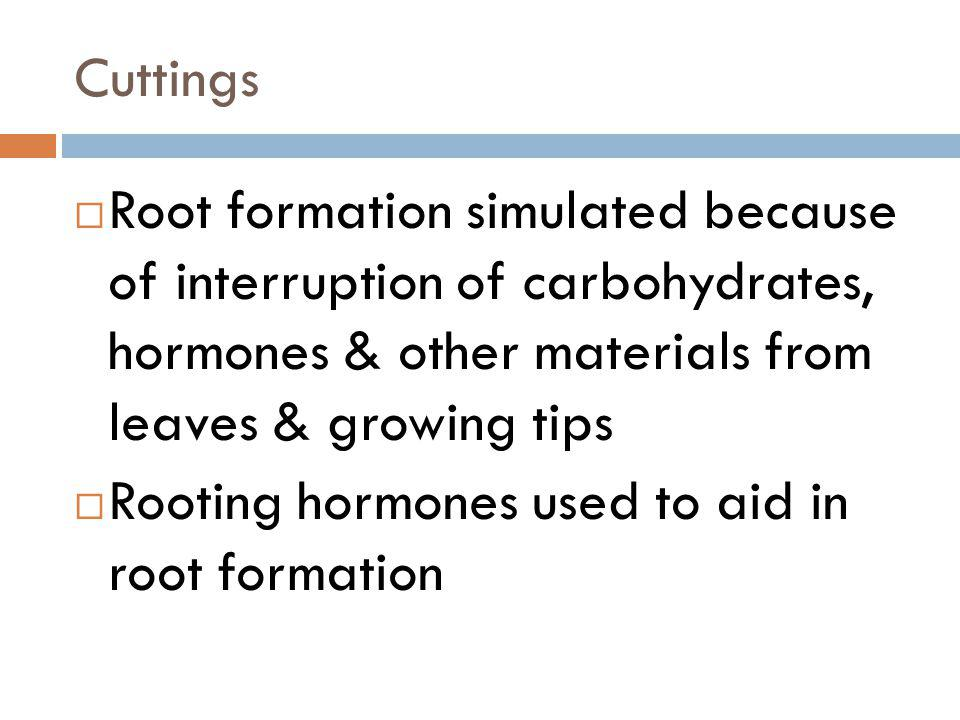 Cuttings Root formation simulated because of interruption of carbohydrates, hormones & other materials from leaves & growing tips.