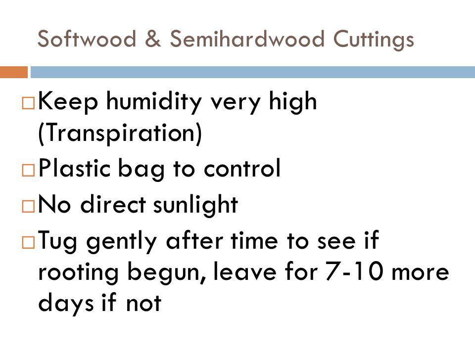 Softwood & Semihardwood Cuttings