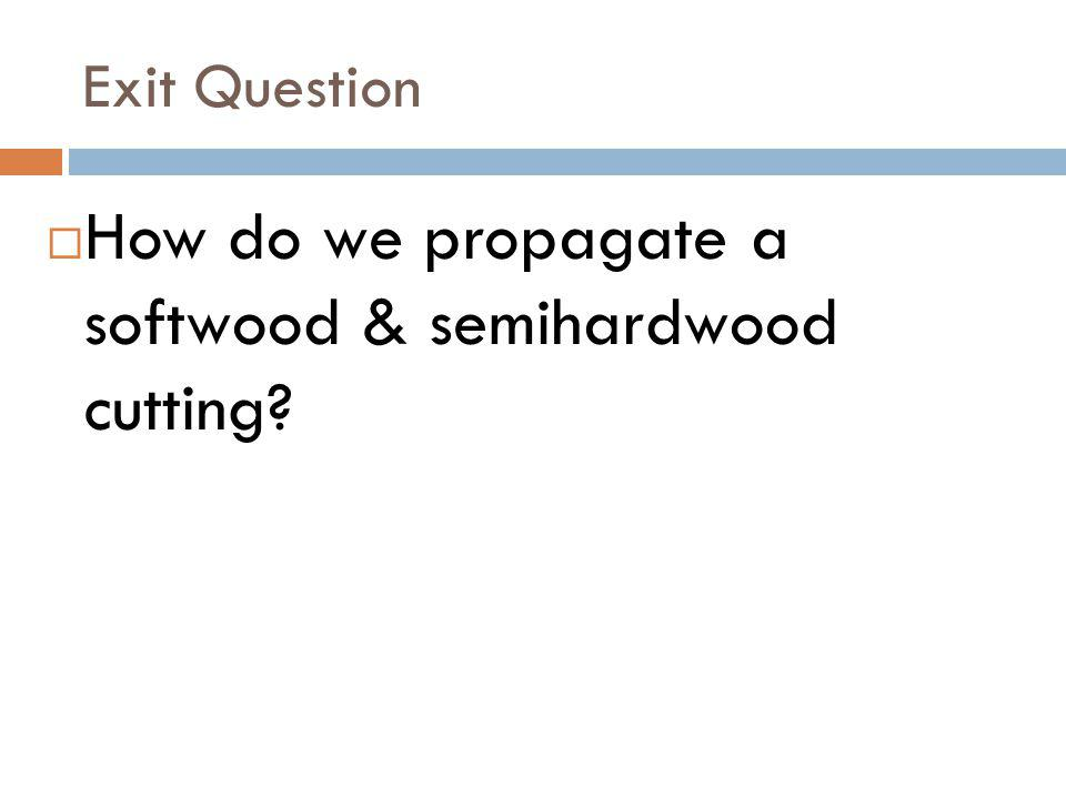How do we propagate a softwood & semihardwood cutting