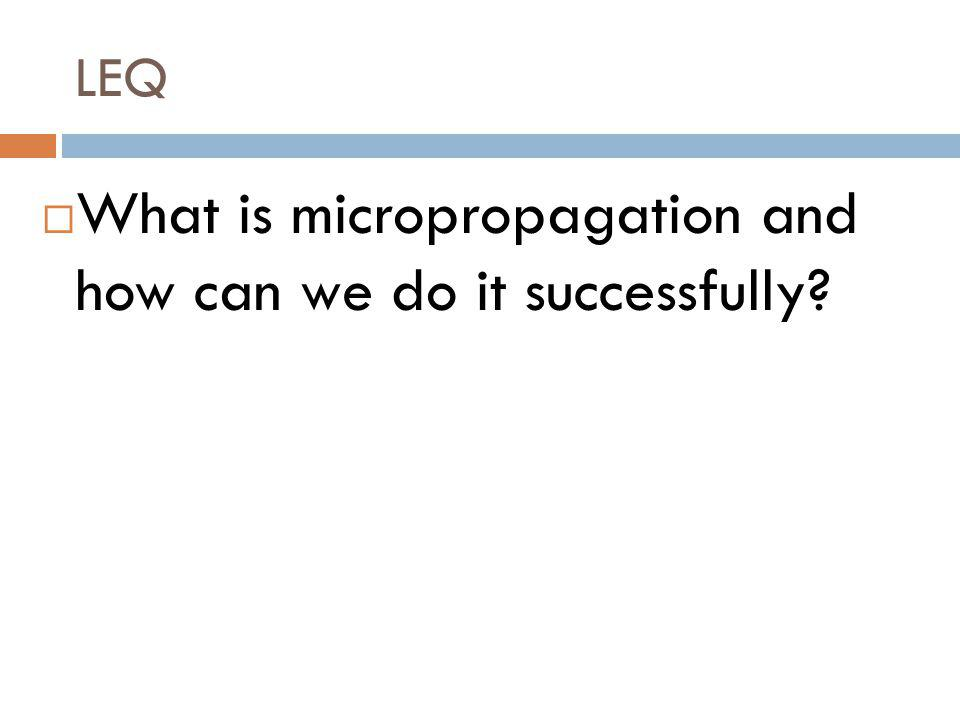 What is micropropagation and how can we do it successfully