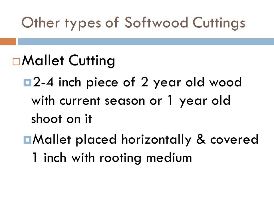 Other types of Softwood Cuttings