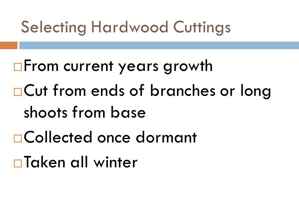 Selecting Hardwood Cuttings
