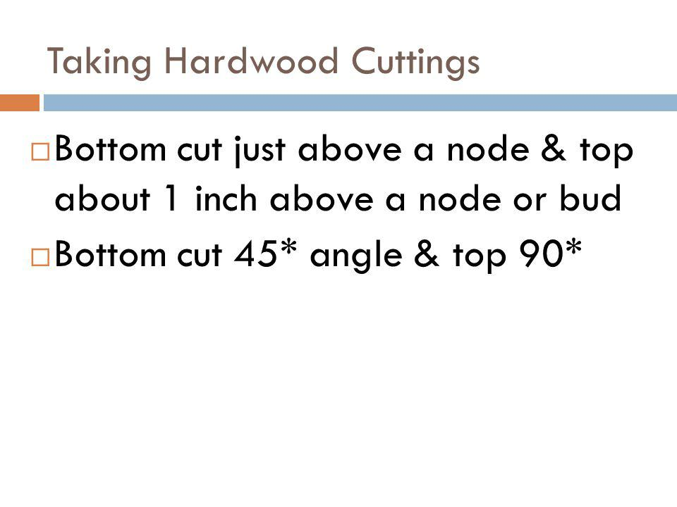 Taking Hardwood Cuttings