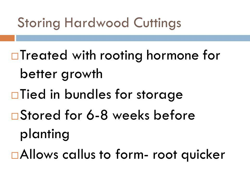 Storing Hardwood Cuttings