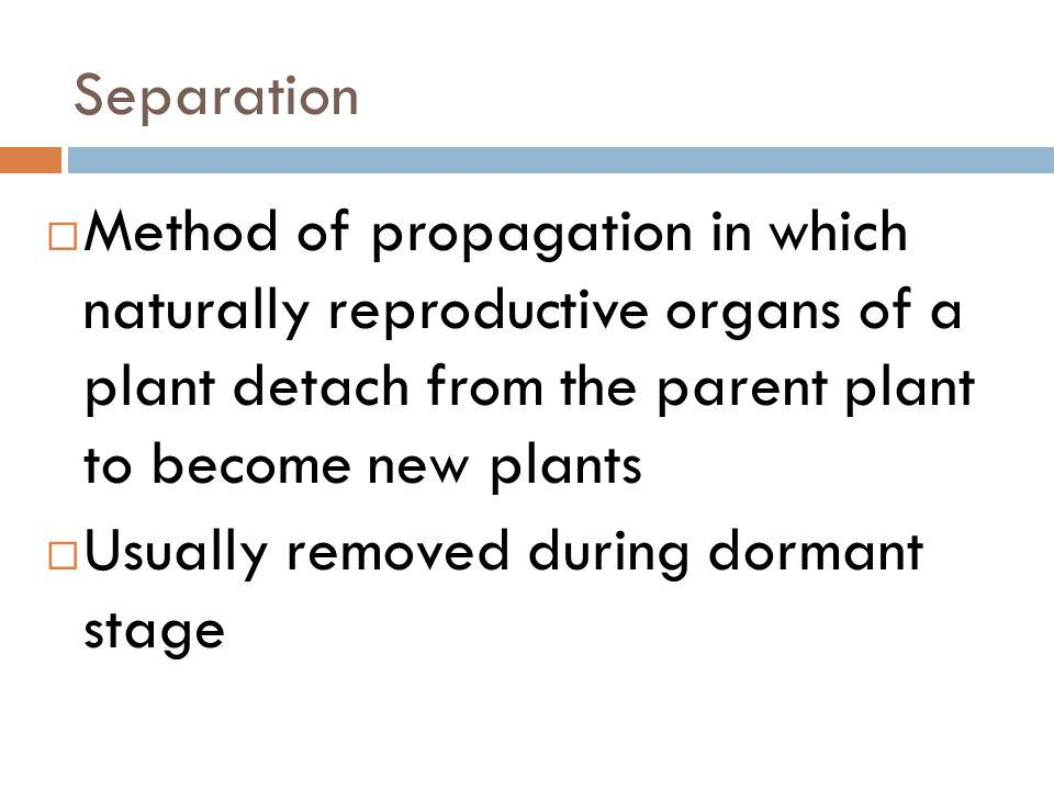 Separation Method of propagation in which naturally reproductive organs of a plant detach from the parent plant to become new plants.