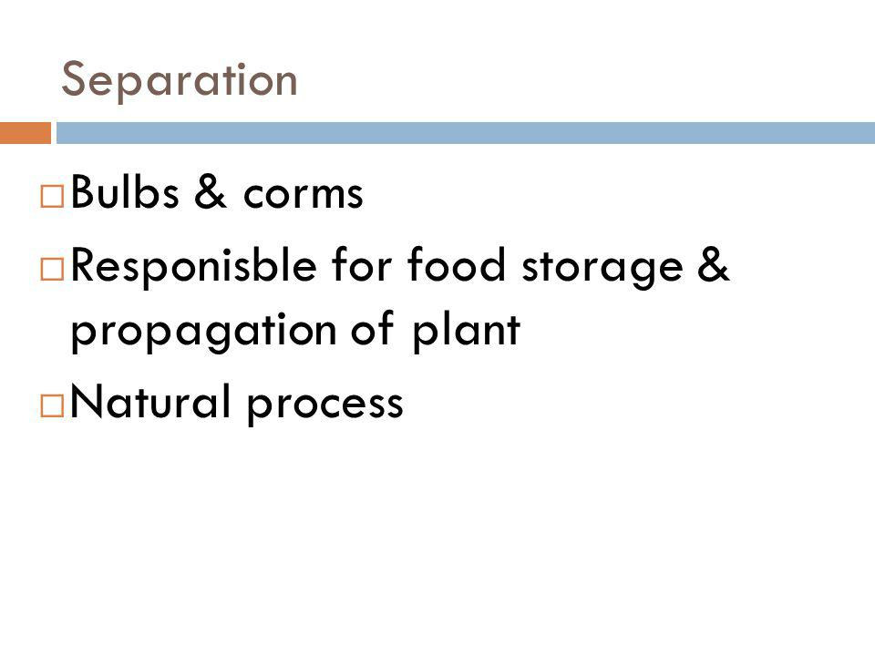 Separation Bulbs & corms Responisble for food storage & propagation of plant Natural process