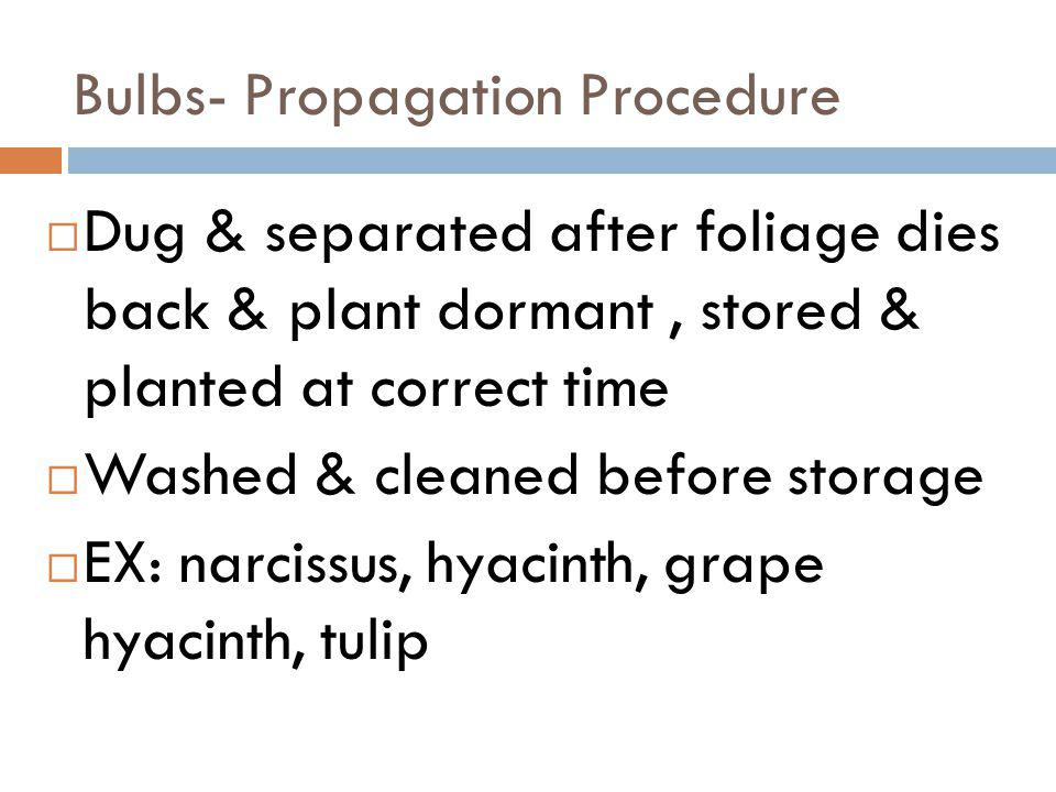 Bulbs- Propagation Procedure