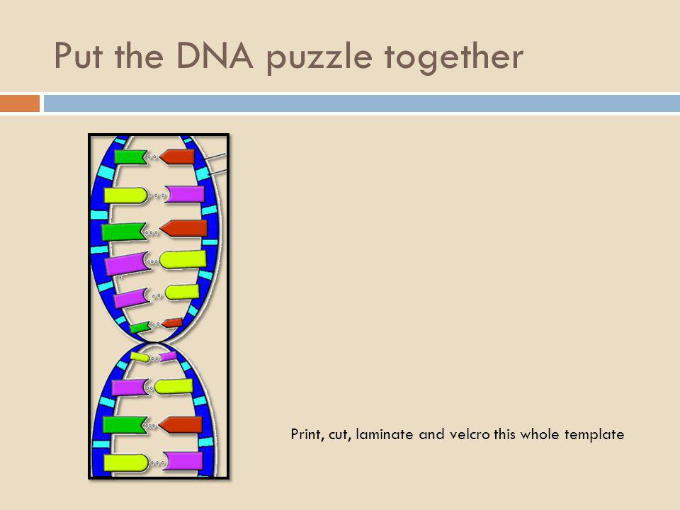 Put the DNA puzzle together