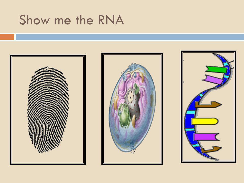Show me the RNA