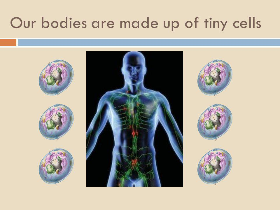 Our bodies are made up of tiny cells