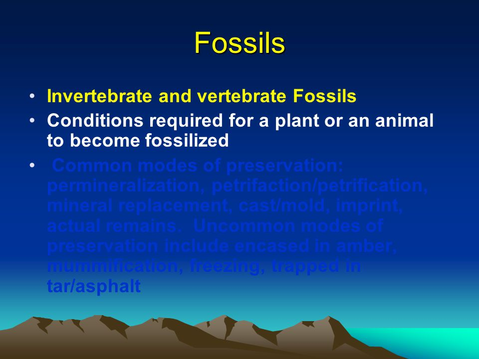 Fossils Invertebrate and vertebrate Fossils
