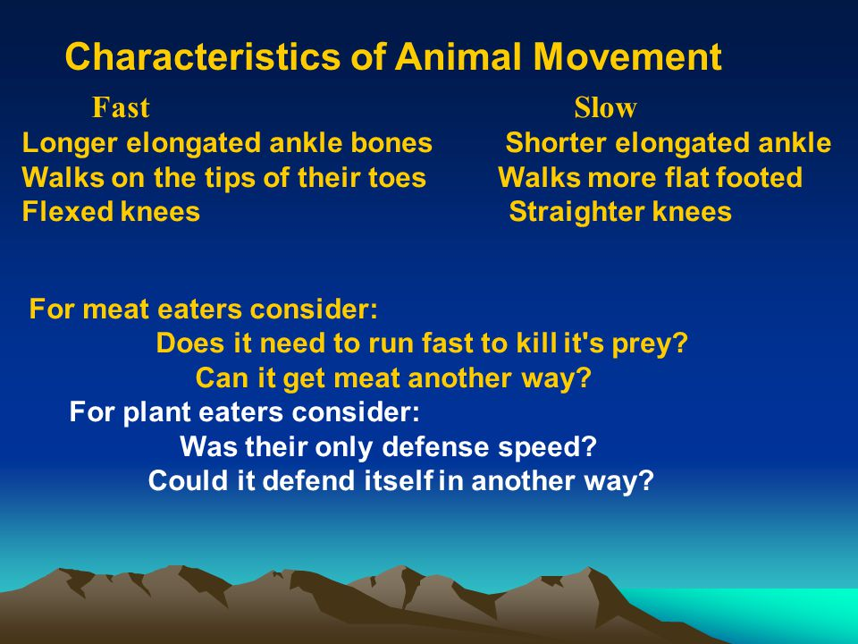 Characteristics of Animal Movement