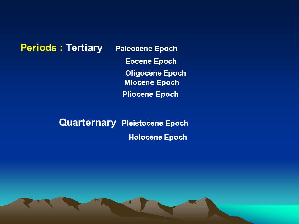 Periods : Tertiary Paleocene Epoch Eocene Epoch Oligocene Epoch