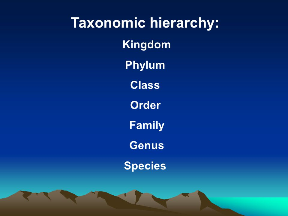 Taxonomic hierarchy: Kingdom Phylum Class Order Family Genus Species