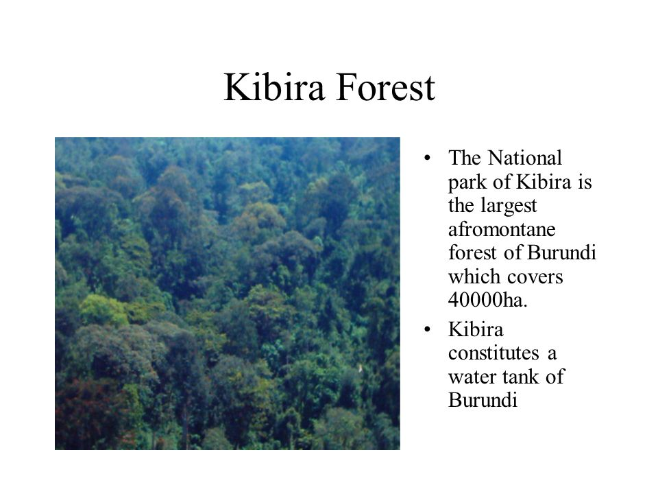 Kibira Forest The National park of Kibira is the largest afromontane forest of Burundi which covers 40000ha.
