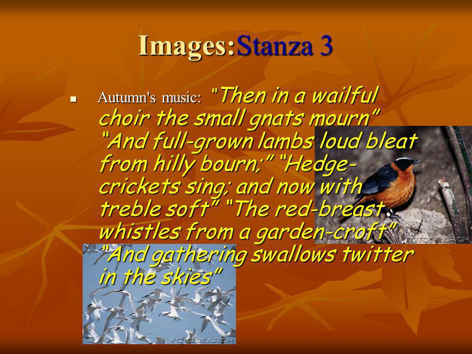 Images:Stanza 3