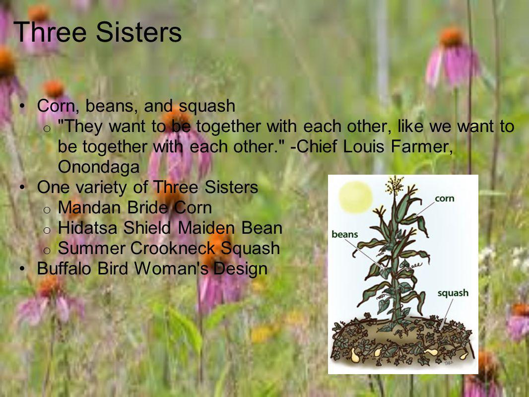 Three Sisters Corn, beans, and squash