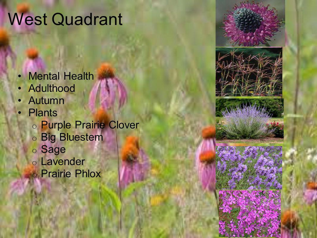 West Quadrant Mental Health Adulthood Autumn Plants