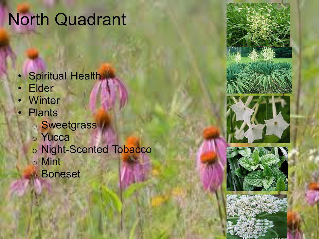North Quadrant Spiritual Health Elder Winter Plants Sweetgrass Yucca