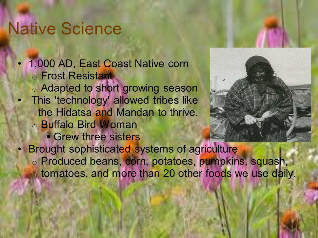 Native Science 1,000 AD, East Coast Native corn Frost Resistant
