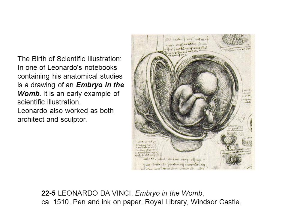 The Birth of Scientific Illustration: In one of Leonardo s notebooks