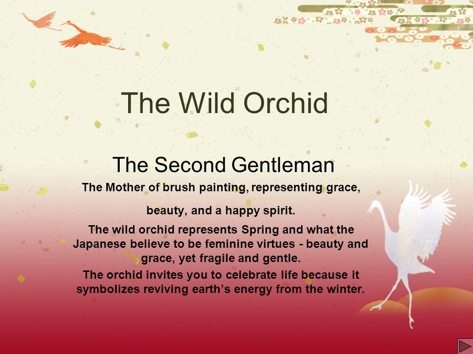 The Wild Orchid The Second Gentleman