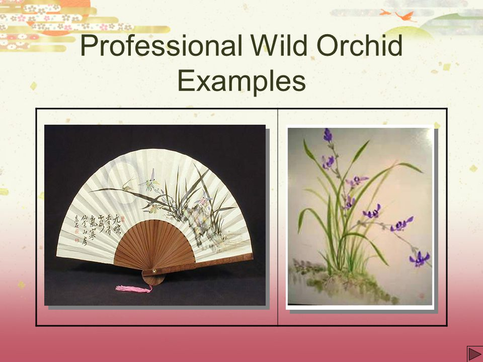 Professional Wild Orchid Examples