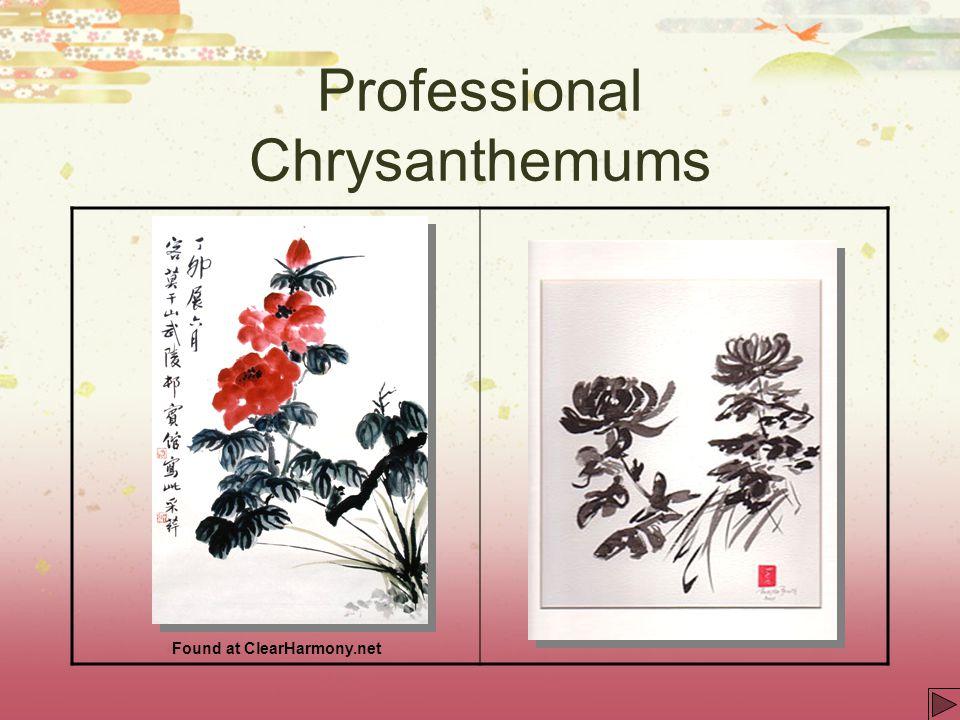 Professional Chrysanthemums