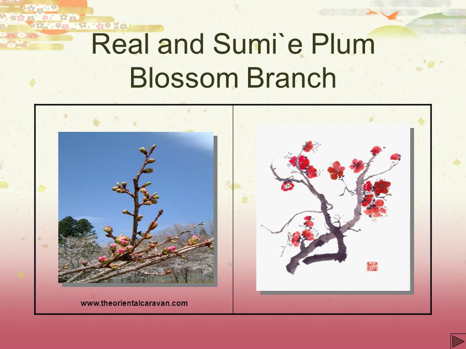 Real and Sumi`e Plum Blossom Branch
