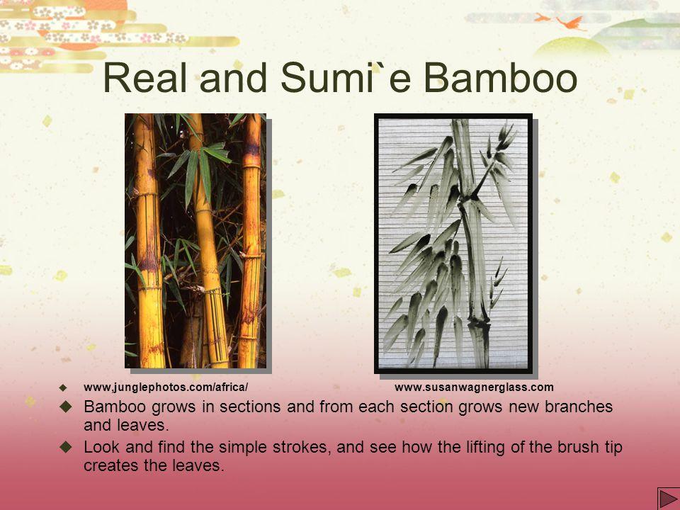Real and Sumi`e Bamboo www,junglephotos.com/africa/ www.susanwagnerglass.com.