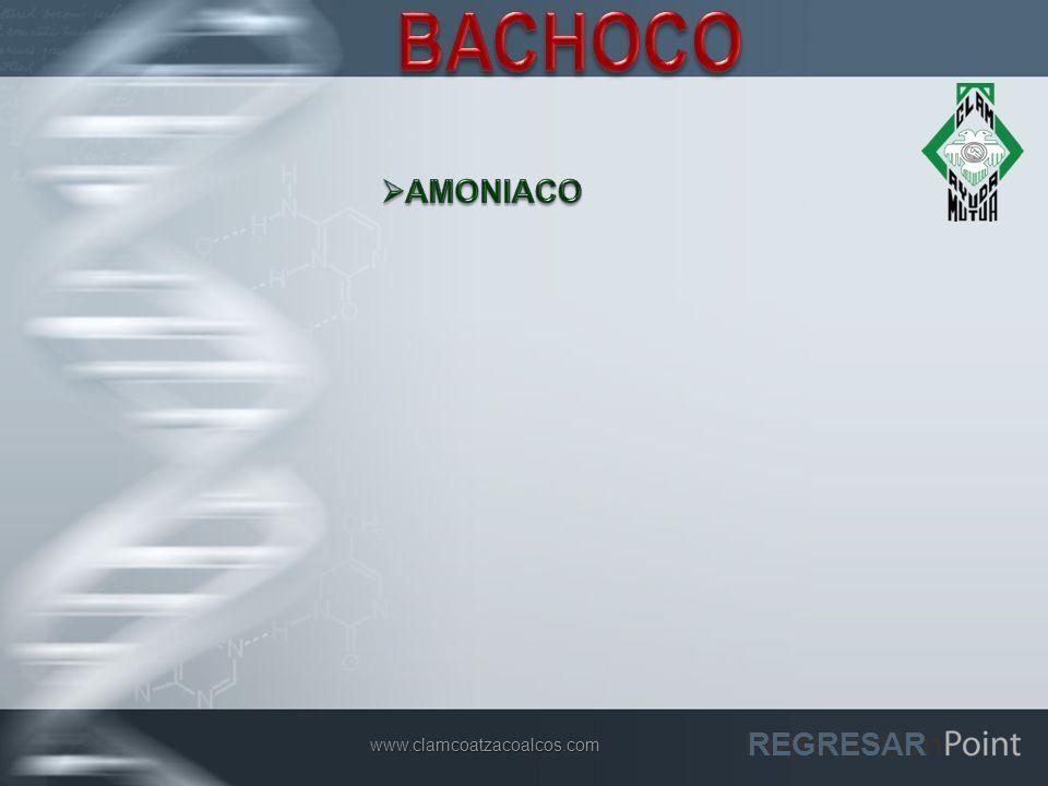 BACHOCO AMONIACO REGRESAR www.clamcoatzacoalcos.com