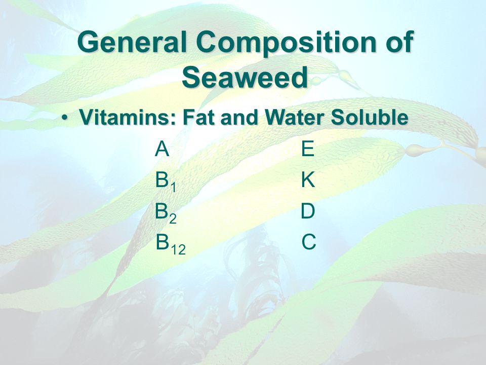 General Composition of Seaweed