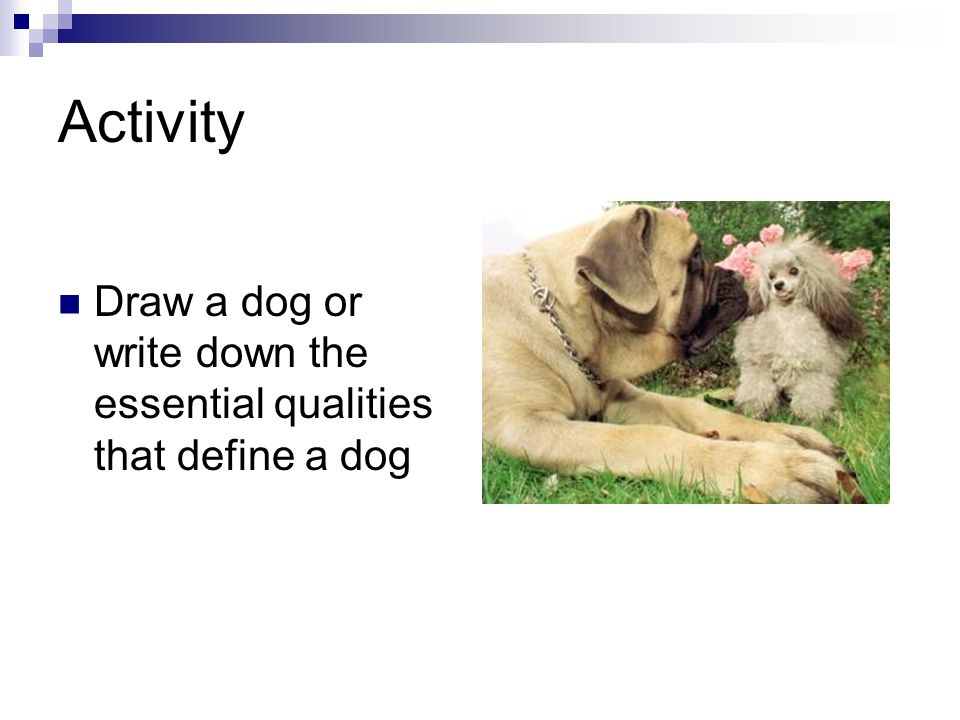 Activity Draw a dog or write down the essential qualities that define a dog