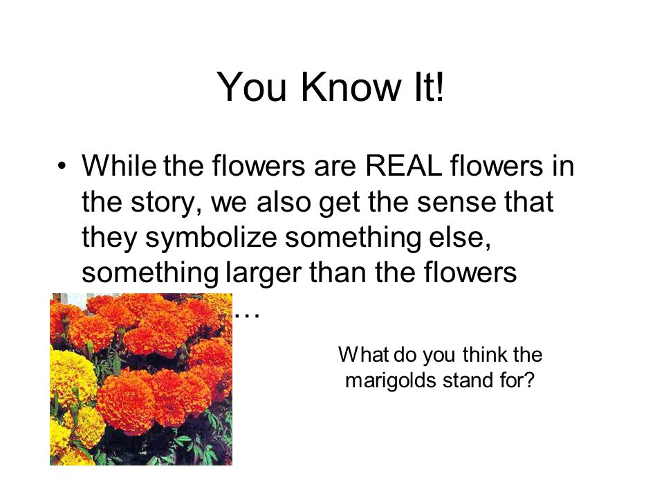 What do you think the marigolds stand for