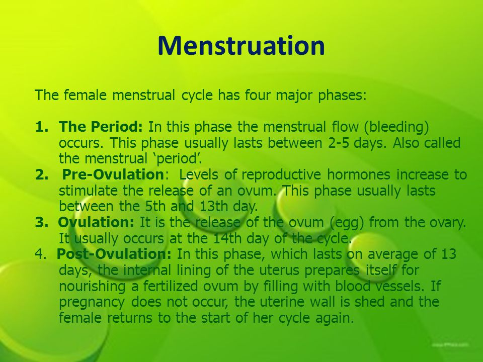 Menstruation The female menstrual cycle has four major phases:
