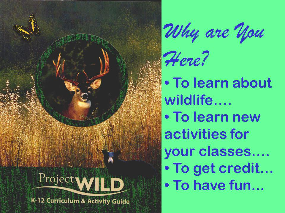 Why are You Here To learn about wildlife….