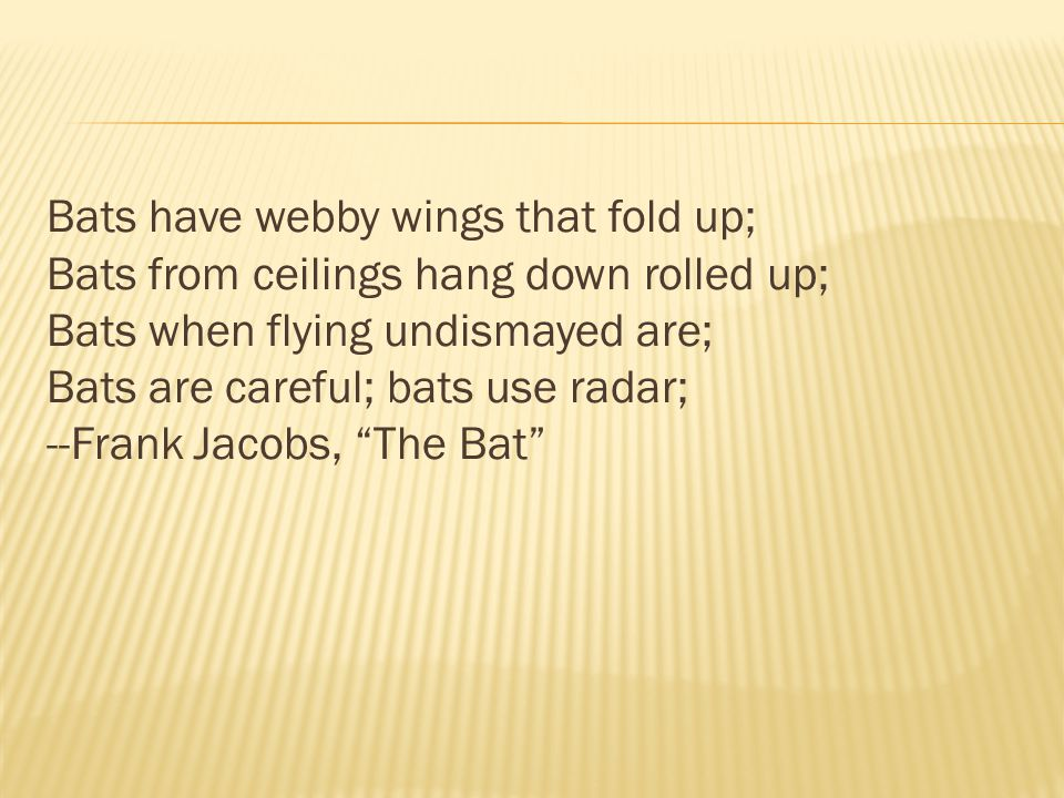 Bats have webby wings that fold up; Bats from ceilings hang down rolled up; Bats when flying undismayed are; Bats are careful; bats use radar; --Frank Jacobs, The Bat