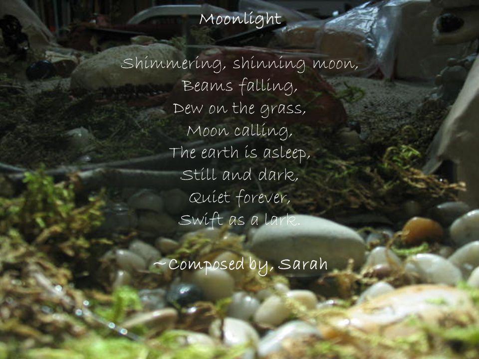 Shimmering, shinning moon,