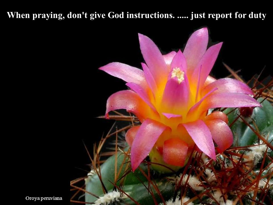 When praying, don t give God instructions. ..... just report for duty