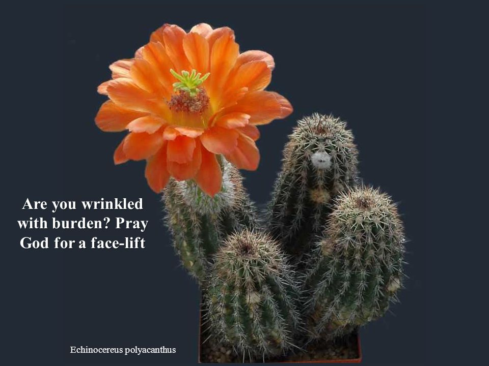 Are you wrinkled with burden Pray God for a face-lift