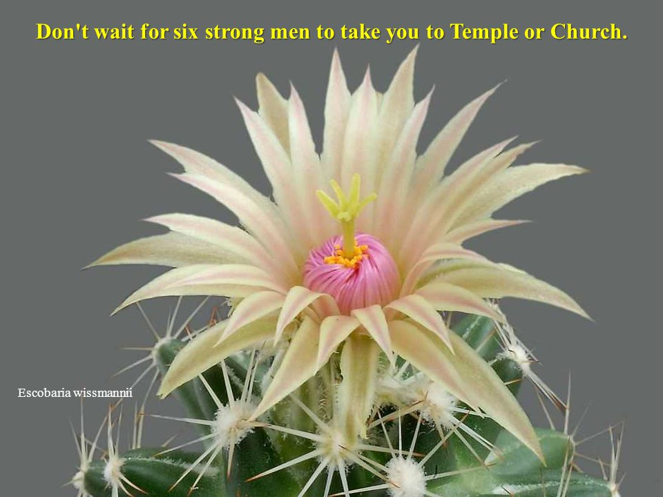Don t wait for six strong men to take you to Temple or Church.