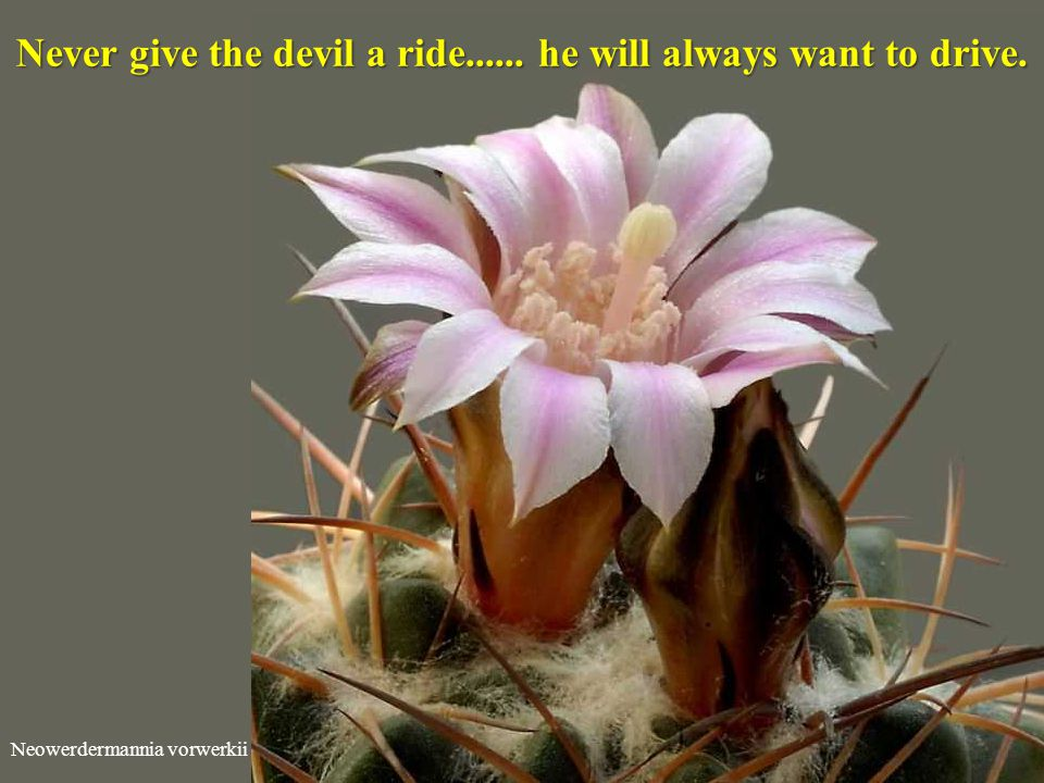Never give the devil a ride...... he will always want to drive.