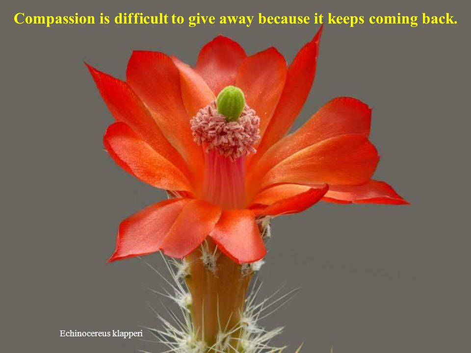 Compassion is difficult to give away because it keeps coming back.